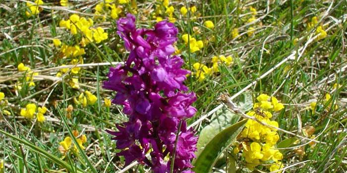 La flore du  Trièves - Camping les Portes  du Trièves